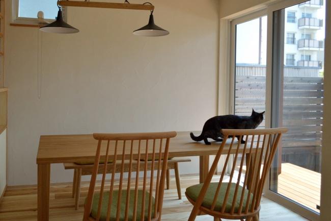 無垢材の家具と猫